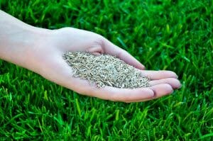 What is Fall Overseeding of a Lawn and Why Is It Important?