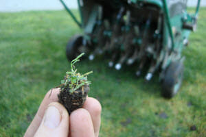 The One Thing to Include in Your Lawn Treatment Services Plan