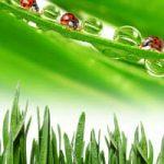 lawn fungicide application