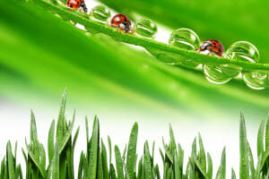 What's the Best Time of Year for Lawn Fungicide Application?