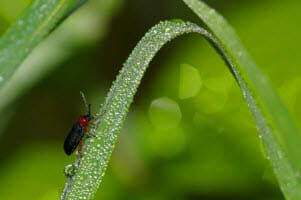 Does Perimeter Pest Control Services Affect the Rest of the Lawn?