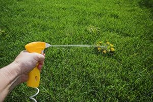 lawn and weed control