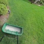 Too Much? What You Need to Know about Overseeding Your Lawn in the Fall