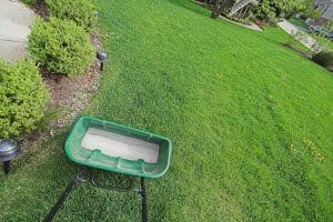 overseeding your lawn in fall