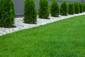 top lawn treatment services