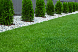 Why Fungicide Is One of the Top Lawn Treatment Services, and Why You Need It Too