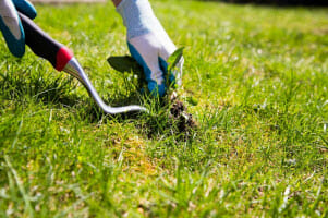 how to take care of lawn grass