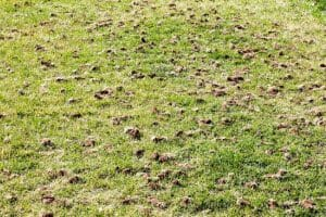 fall lawn aeration services