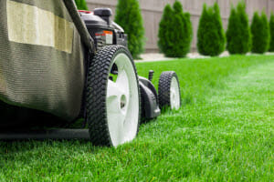 Winter Lawn Care: What Should I Be Doing during the Winter Months?