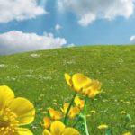 Understanding the Real Benefits of Organic Lawn Fertilizer