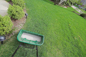 Spring Weed Control: 4 Steps to Take Now