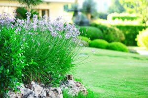 Duluth Lawn Care Services