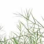 Can You Use Weed Killer for Bermuda Grass Without Killing Your Lawn?
