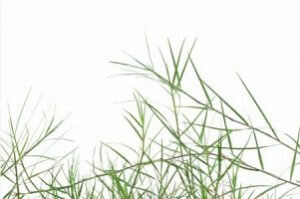 weed killer for bermuda grass