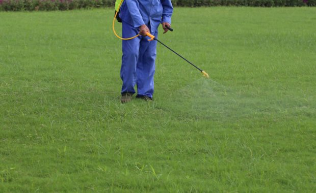 Fall Insecticide Application Services